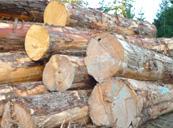 広島の新築・リフォーム・増改築「プレザーホーム」 木材製品「原木」