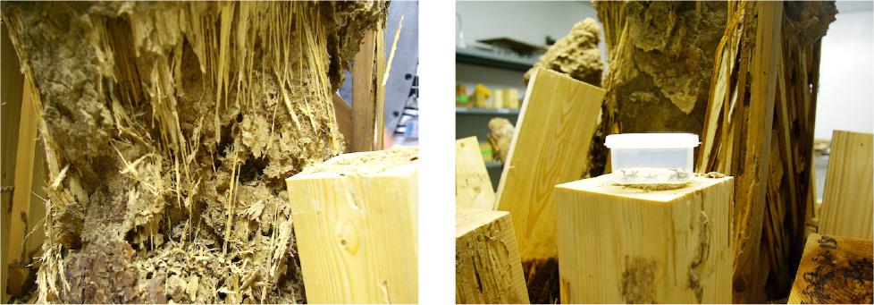 広島の新築・リフォーム・増改築「プレザーホーム」 「柳本商店広島工場 シロアリ研究所による防腐防蟻処理のされていない実験用木材」イメージ